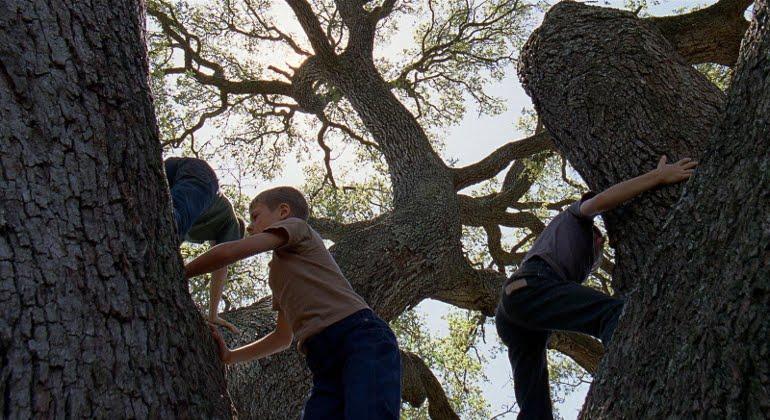 Imagen de El árbol de la vida