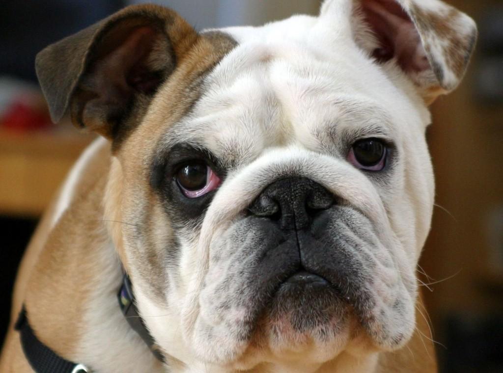 m-fotos-perros-imagenes.html