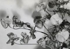 Flores feas